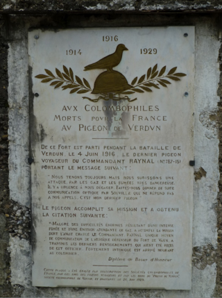 The last pigeon at Fort Vaux