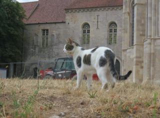 French cats.Vezelay.July2015