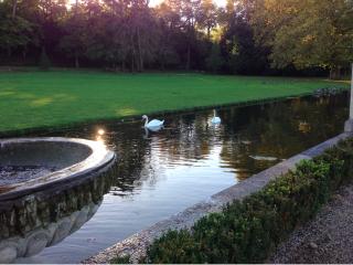 Chantilly.English landscape garden.swans.14 OCT 2017