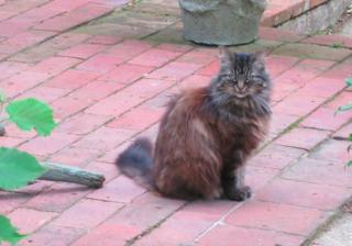 Cat.Monk's House.July 15.