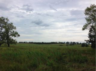 Homestead National Monument. Restored Prairie.21 August  2017