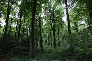 Forêt de Eawy