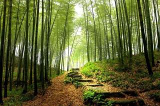 Forest de Fontainebleau