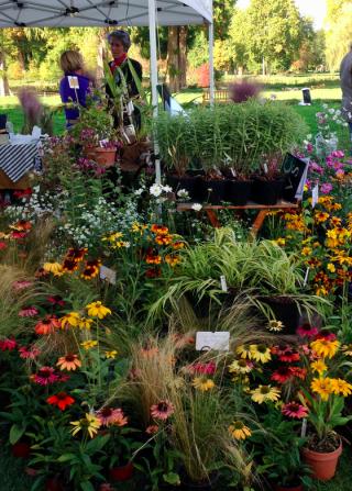 Chantilly.Journées des Plantes.echinacea