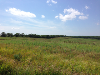 Restored acres of prairie at Homestead.my photo