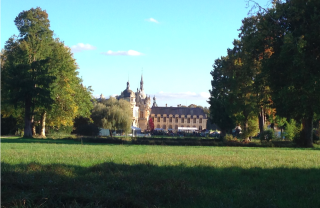 Chantilly.lawns  trees.14 OCT 2017