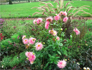 Fontainebleau.Flowers in border-5.OCT 2017