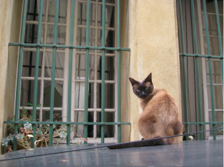 Cat on car.somewhere in France.