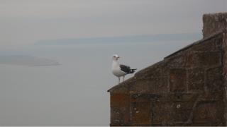 Mont-St-Michel.seagull.Jan2017