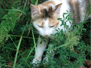 French cats.Sedan.2015