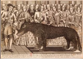 Beast of Gevaudan.stuffed at Versailles.
