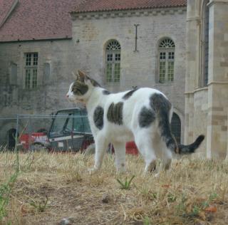French cats.Vezelay.2015